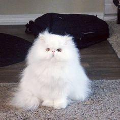 Brimley, le chat qui a trouvé une maison pour la toute première fois ! - Cause animale - Wamiz