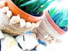 Copy Cat! DIY Inspired Burlap Wrapped Succulents | Bonita Rose, Life.Love.Color.Art a life unrehearsed