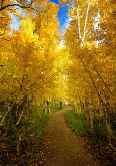 """coiour-my-world:  """"The Golden Path by Darvin Atkeson  """""""