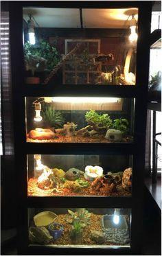 Instructions to build a 5 enclosure reptile shelf.