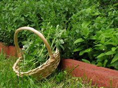 fűszerek elrakása télire Balcony Garden, Natural Health, Natural Remedies, Spices, Herbs, Yard, Gardening, Canning, Nature