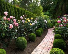 Formal Boxwood With Roses Brick Path
