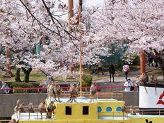 ときわ公園(山口県宇部市)