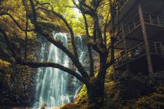 Photograph A waterfall in the forest by Hanson Mao on 500px