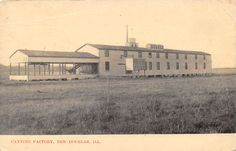 New Douglas, Illinois Canning Factory, 1907 Postcard