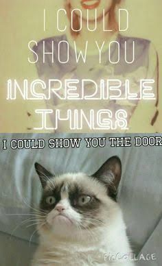 But grumpy cat it's Taylor Swift we're talking about - Tap the link now to see all of our cool cat collections! Grumpy Cat Quotes, Funny Grumpy Cat Memes, Funny Animal Jokes, Stupid Funny Memes, Cute Funny Animals, Funny Relatable Memes, Funny Animal Pictures, Animal Memes, Funny Cats