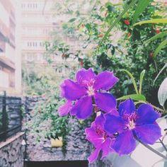 #sp #flores na selva de pedra
