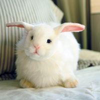 Realistic looking rabbit!!  Could be easter present. They have great looking lambs too! From imaginechildhood.com