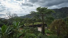Green roof and charred wood blend Atelier Villa into Costa Rican jungle Costa Rica, Round Light Bulbs, Concrete Cover, Jungle Scene, Ipe Wood, Charred Wood, Dappled Light, Exterior Cladding, Holiday Resort