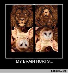 lion-mouse pig-owl