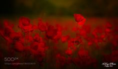 red... by 3DogPhoto. @go4fotos