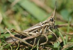 Eating Crickets: The Sustainable Animal Protein Alternative