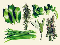 Easy herb garden via Goop: While herbs are a staple of any serious kitchen garden, you don't have to have raised beds—or even a yard—to get started, as most varieties can grow quite happily in a few small pots in … Organic Gardening, Gardening Tips, Urban Gardening, Vegetable Gardening, Container Gardening, Fresco, Types Of Christmas Trees, Herb Garden Design, Herbs Garden