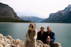 15 Animal Photobombs That Became Famous on the Internet: Crasher Squirrel