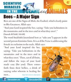 Bees are one of the Signs of Allah, the Exalted, which clearly point to His Greatness.  #ScientificMiraclesInTheOceansAndAnimals #DarussalamPublishers #IslamicEBooks #AmazonKindle #KindleStore