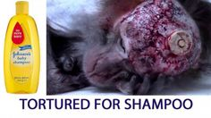 Gorsky, I have recently learned that the company you manage, Johnson & Johnson, one of the biggest companies in th. Stop Animal Testing, Stop Animal Cruelty, Animal Protection, Protection Quotes, Evil Person, Garden Animals, Sad Pictures, The Ugly Truth, Johnson And Johnson