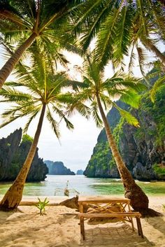Coconut Palms in The Philippines, what an amazing view ❤! Give someone a relaxing trip with hotelgift.com