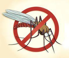 Návod: Jak si vyrobit bezedný repelent proti komárům