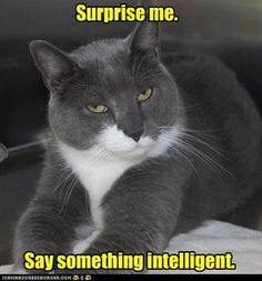 Surprise me. - LOLcats is the best place to find and submit funny cat memes and other silly cat materials to share with the world. We find the funny cats that make you LOL so that you don't have to. Funny Shit, Funny Animal Memes, Cute Funny Animals, Funny Cute, The Funny, Cute Cats, Funny Sarcastic, Funny Kitties, Grumpy Cats