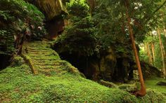 Stairs Moss Forest Wallpapers, iPhone Wallpaper, Facebook Cover ...