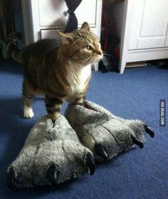 「ちょこん」だけで悶絶死できる。猫の肉球&前足画像を集めてみた。