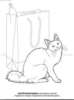 Раскраска Ангорская кошка. Раскраска Ангорская, породы кошек, домашние кошки, разукрашки для детей, скачать раскраску