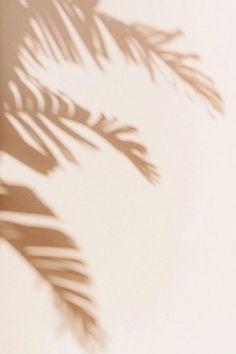 Whats Wallpaper, Beige Wallpaper, Iphone Background Wallpaper, Aesthetic Pastel Wallpaper, Aesthetic Backgrounds, Aesthetic Wallpapers, Palm Wallpaper, Phone Screen Wallpaper, Wallpaper Patterns