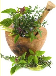 3 Must Have Herbs For Winter Health