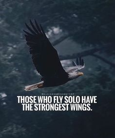Best motivational quotes - Positive Quotes About Life Wisdom Quotes, True Quotes, Great Quotes, Motivational Quotes, Inspirational Quotes, Fly Quotes, Bird Quotes, Alone Quotes, Warrior Quotes