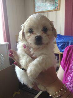 Tiny baby puppy
