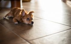 7 Tips for Selecting a Pet Friendly Floor for your Home! Check in out on The Barkitect blog today!