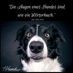 Ein schönes Zitat von Stefan Wittlin: Die Augen eines Hundes sind wie ein Wörterbuch. Wohl dem, der darin lesen kann…