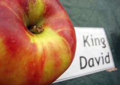 """King David"" Apple variety- I swear by them, they are the best baking apple out there, granny smith can just sod off."