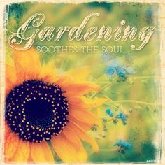 A garden is a place that becomes your haven. Summer gardening brings joy and tranquility to those who cultivate and grow them Joy Quotes, Garden Quotes, Happy Summer, Blue Mountain, Summer Garden, Beautiful Soul, My Happy Place, My Flower, Make You Smile