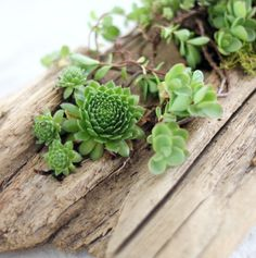 Don't just settle for fitting in - when you can stand out with these fabulous succulent planter projects!