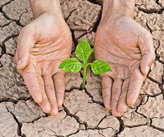 Combaterea bolilor si daunatorilor in spatii protejate Solar
