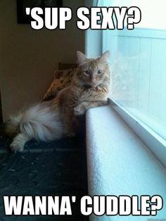 funny cat pose window sup ladies Funny Shit, Funny Animal Memes, Cute Funny Animals, Funny Animal Pictures, Cute Cats, Funny Cats, Funny Memes, Hilarious Jokes, Funny Photos