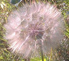 Seeds before flight « Gooey Art