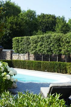 hedge with trees behind for extra privacy: