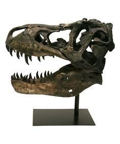 Another great find on #zulily! Large T-Rex Skull Model by Contrast #zulilyfinds