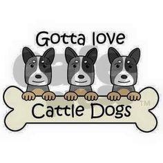 Gotta love cattle dogs