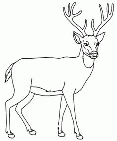 baby deer coloring pages Printable Kids Colouring Pages