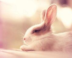 Милые кролики – фото, которые поднимут тебе настроение