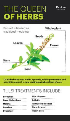 Completely Heal Any Type Of Arthritis - Arthritis Remedies Hands Natural Cures - 10 Benefits of Tulsi — Combats Cancer Infections - Dr. Axe - Arthritis Remedies Hands Natural Cures Completely Heal Any Type Of Arthritis - Arthritis Remedies, Health Remedies, Holistic Remedies, Herbal Remedies, Arthritis Relief, Cortisol, Natural Medicine, Herbal Medicine, Medicinal Plants