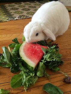 Bunny Enjoys a Bit of Watermelon Salad on a Hot Summer Day — The Daily Bunny Benny And Joon, Baby Animals, Cute Animals, Little Bunny Foo Foo, Beautiful Rabbit, Watermelon Salad, House Rabbit, Honey Bunny, All Things Cute