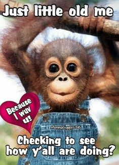 Baby monkey for inspiration if I were ever in a show that needs me to be an orangutan. Cute Little Animals, Cute Funny Animals, Funny Cute, Baby Animals Pictures, Cute Animal Pictures, Cute Monkey Pictures, Funny Pictures, Cute Baby Monkey, Baby Orangutan