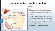 Mecanismo de acción de la insulina  Enelhígado:  La insulinainactivaa la fosforilasa hepática,  principal enzima que degrada...
