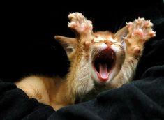 15 Adorable Roaring Kittens