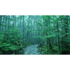 "@tsuya15's photo: ""#InstaSize#ようこそ#雨の森#入口#長野#八ヶ岳#森#雨#自然#グリーン#forest#woods#rain#tree#nature#green#fog"""