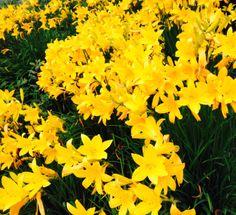 yellow amazing flowers